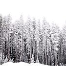Frosty by Ellinor Advincula