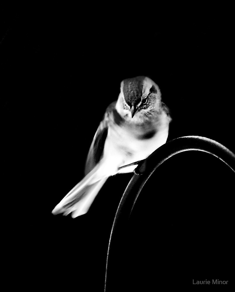 American Tree Sparrow #2 by Laurie Minor