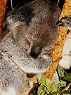 Sleepy Koala #1 by Kayleigh Walmsley