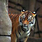 Tiger tiger burning bright by Sea-Change