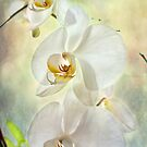 Orchids by John Rivera