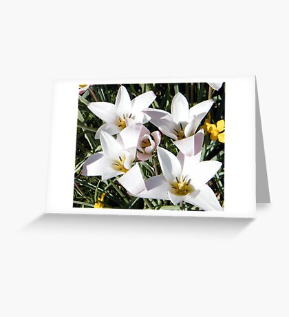 Pretty in White 2 Greeting Card