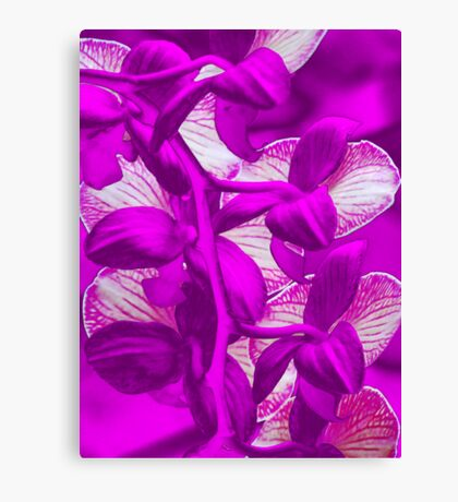 Orchid Collection - 9 Canvas Print