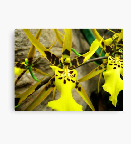 Orchid Collection - 13 Canvas Print