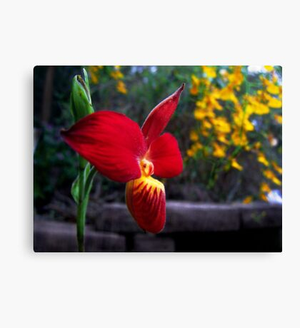 Orchid Collection - 14 Canvas Print