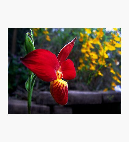 Orchid Collection - 14 Photographic Print