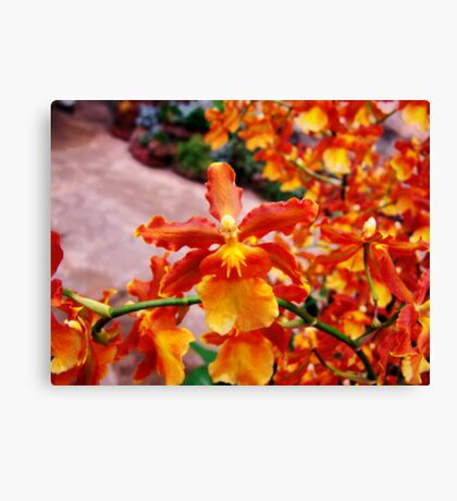 Orchid Collection - 17 Canvas Print