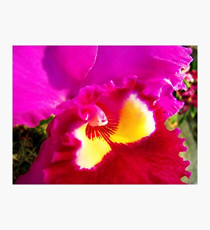 Orchid Collection - 19 Photographic Print