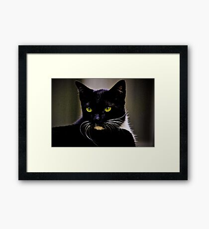 Mr Macdonald part II: On Featured: Cats-and-dogs Group Framed Print
