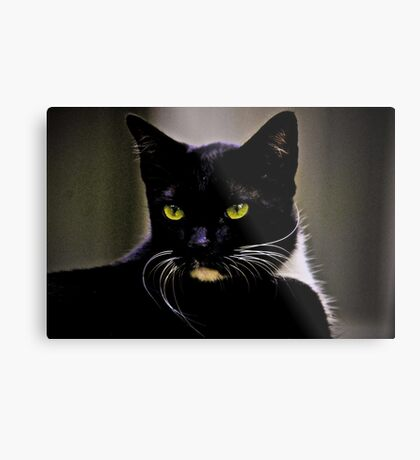 Mr Macdonald part II: On Featured: Cats-and-dogs Group Metal Print
