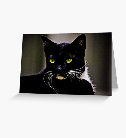 Mr Macdonald part II: On Featured: Cats-and-dogs Group Greeting Card