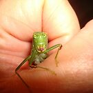 Safe in my hand...a katydid by May Lattanzio