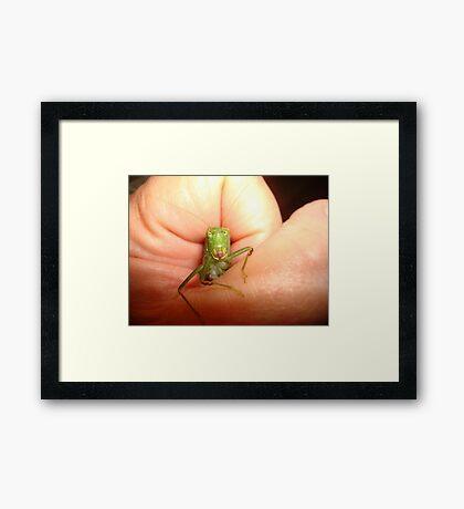 Safe in my hand...a katydid Framed Print
