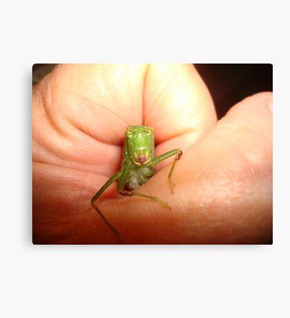 Safe in my hand...a katydid Canvas Print