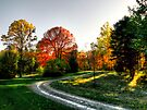 Autumn Sunset by Marcia Rubin
