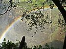 Rainbow near Victoria Falls, Zimbabwe, Africa by Margaret  Hyde