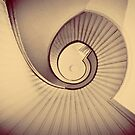 spiral by Tania Palermo