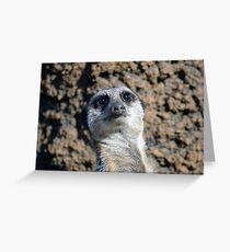 Amusing Meerkat Greeting Card
