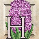 H is for Hyacinth Flower Monogram Card by Stephanie Smith