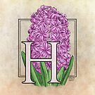 H is for Hyacinth Flower Monogram by Stephanie Smith
