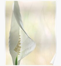 Peace Lily 1/2 Poster