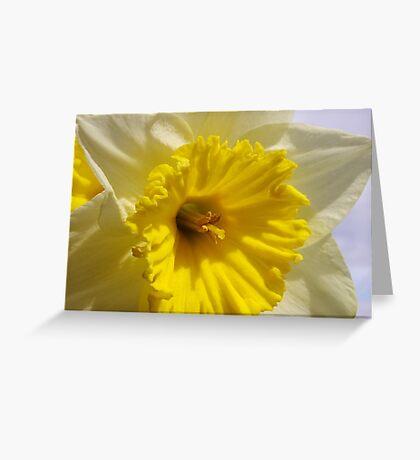delightful daffodil close up  Greeting Card