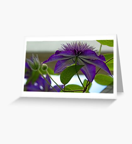 -Multi-Blue Clematis Greeting Card