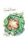 Cauliflower by Stephanie Smith