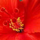 Pollen Aplenty by Gloria Abbey