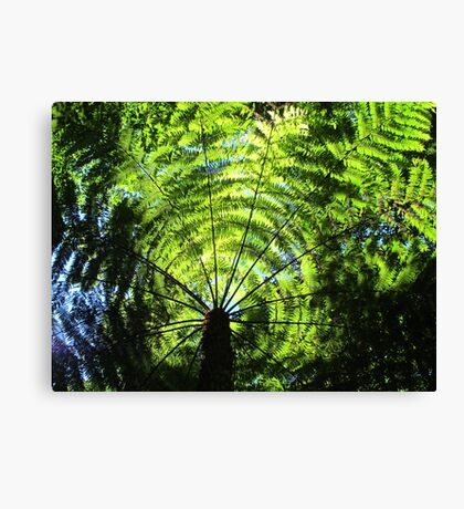 Light Through the Fronds Canvas Print