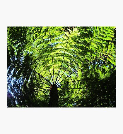Light Through the Fronds Photographic Print