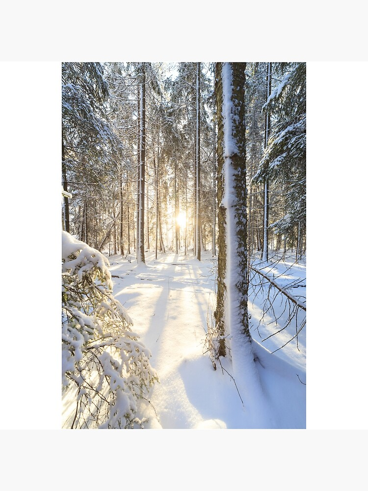 Sunshine in winter forest by Juhku