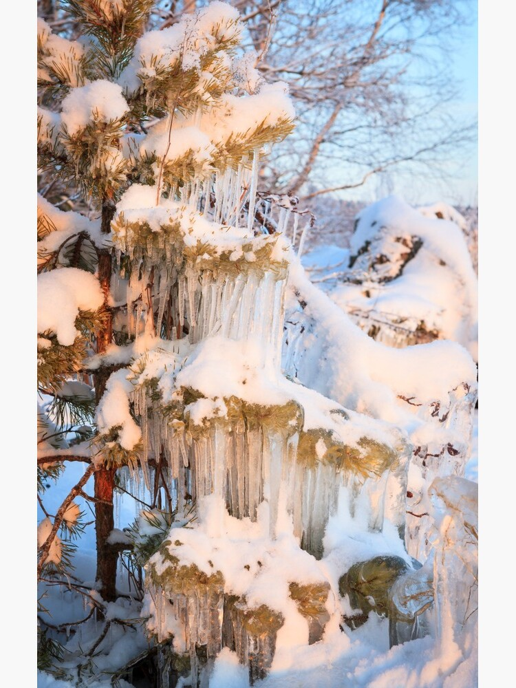 Beautiful icicles ice formation on small tree by Juhku