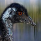 Emu by Eve Parry