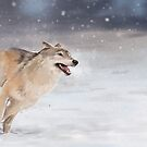 Snowy Wolf by MadliArt