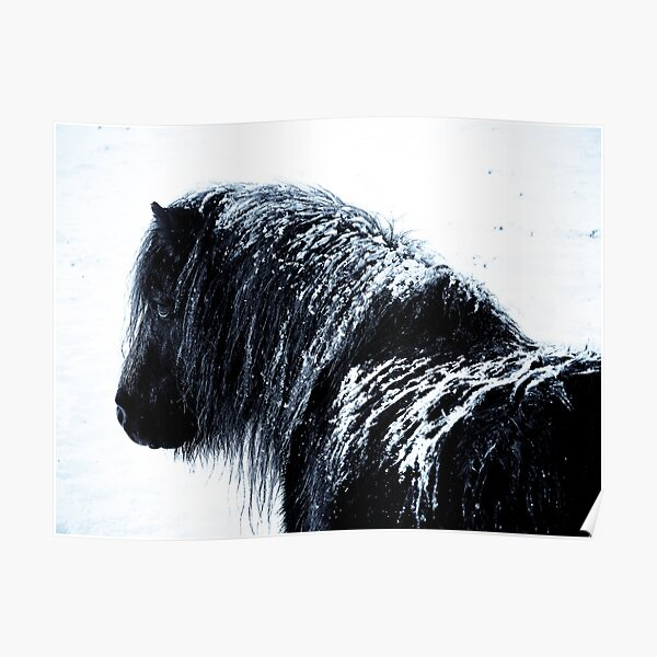 Shetland pony in the snow Poster