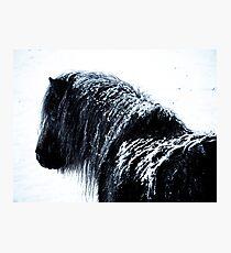 Shetland pony in the snow Photographic Print