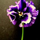 Crinkle Pansie by Livvy Young