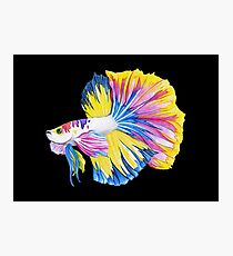 Siamese Fighting Fish | Betta splendens Yellow Blue Pink (Black) Photographic Print