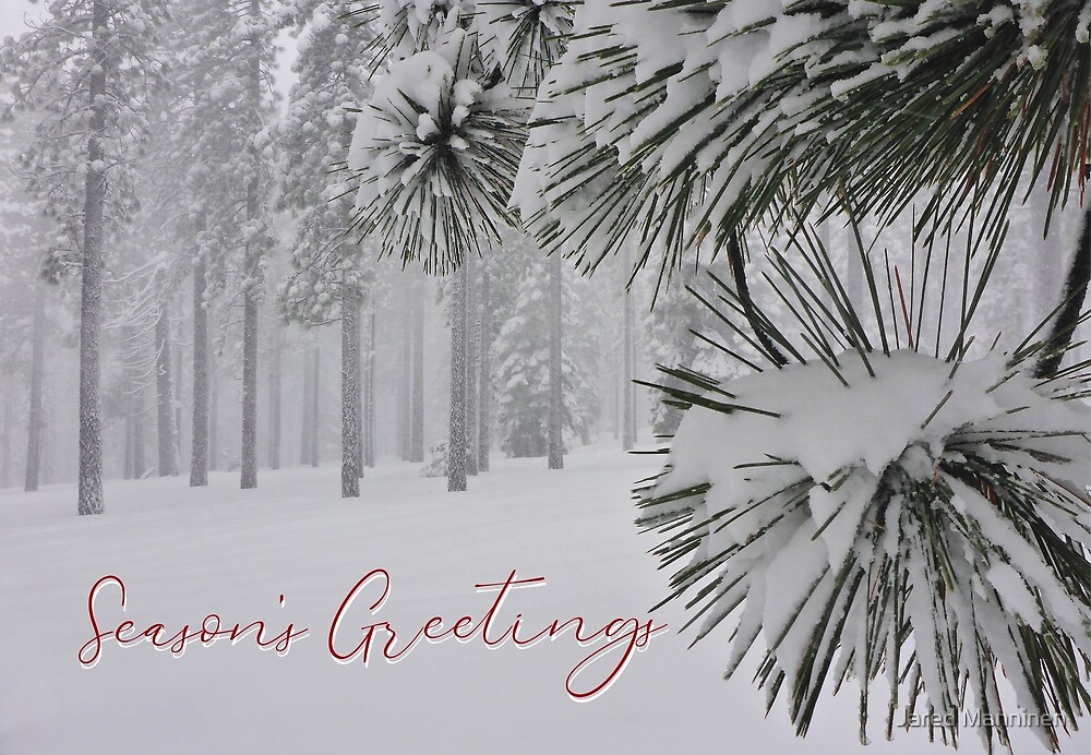 Forest of Snowy Jeffrey Pine Trees Holiday Card by Jared Manninen