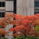 Colourful Autumn in the City by Gerda Grice