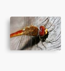 Red/Golden Dragonfly Canvas Print
