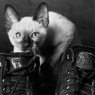 CAT by billyboy