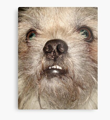 JACK THE WOOKIE Metal Print