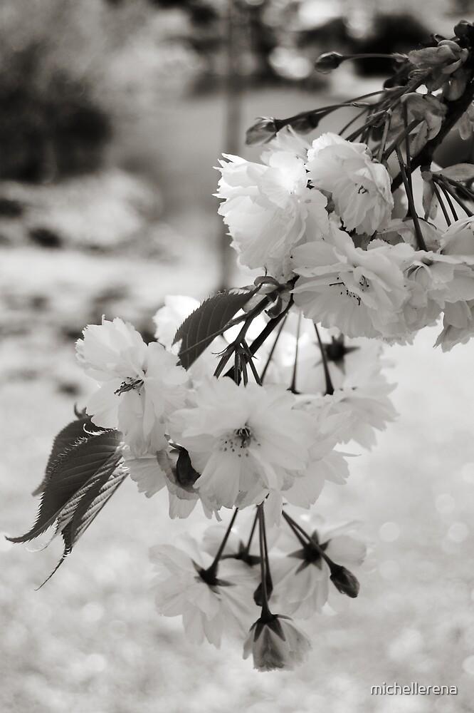 Bokeh Blossoms by michellerena