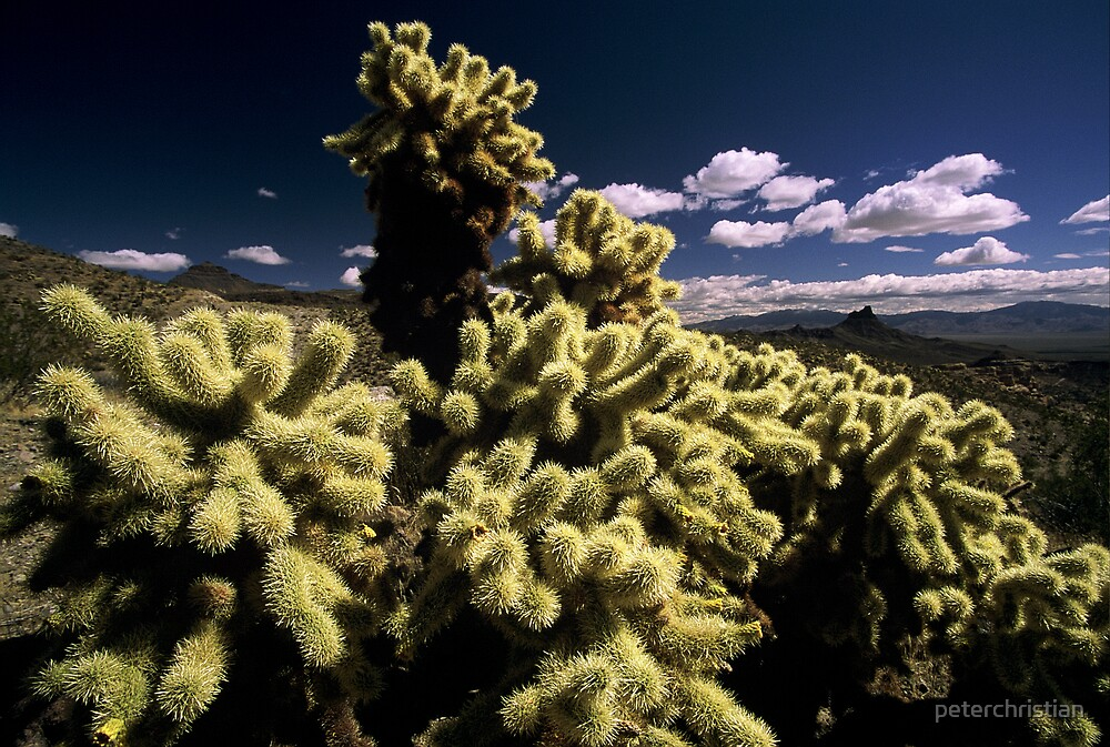 jumping cholla by peterchristian