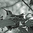 Hummingbird Nesting by Heather Friedman
