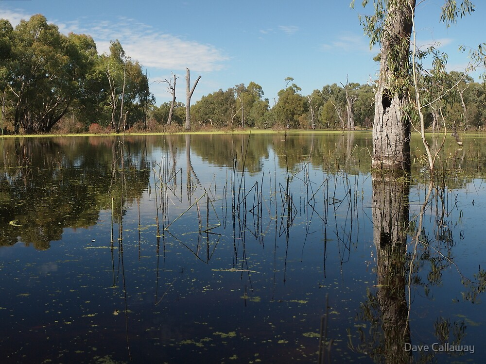 Reclaimed Swamp - Torrumbarry by Dave Callaway