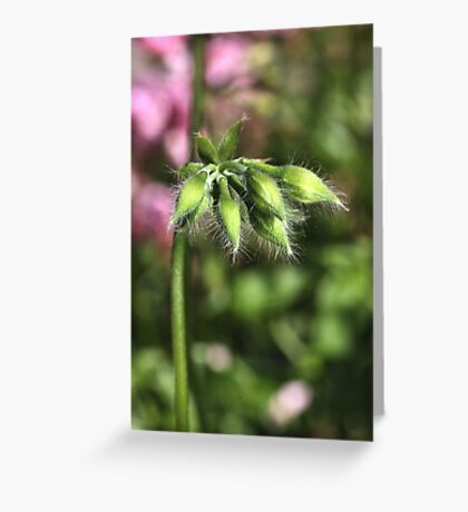Buddies about to Bloom Greeting Card