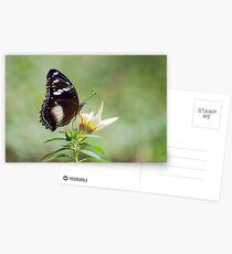 Sweet As - butterfly in Innisfail. Postcards